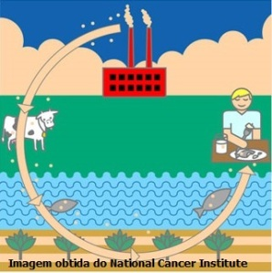 dioxins_graphic National cancer institute2